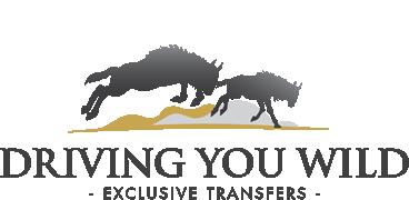 Amalinda Safari Collection - Driving You Wild