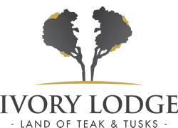 Amalinda Safari Collection - Ivory Lodge